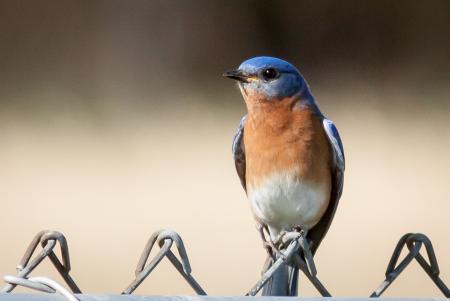 Las mejores semillas para los comederos del pájaro del patio trasero | Georgia DNR - División de Recursos de Vida Silvestre