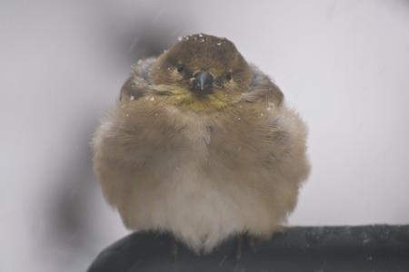 ¿Cómo se mantienen las aves calientes? | Tough Little Birds